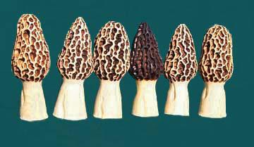 Mushroom maker worldwidechainsawcarvingandartforum